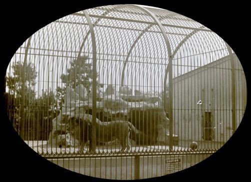 LionPark-zoo